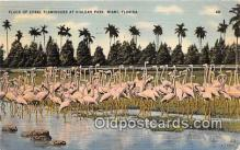 yan090023 - Miami, FL, USA Flock of Coral Flamingos, Hialeah Park Postcard Post Card