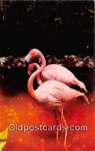 yan090032 - Flamingos Postcard Post Card