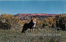 yan100005 - Great West Coyote Postcard Post Card