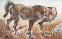 yan100014 - Timber or Gray Wolf Postcard Post Card