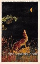 yan100021 - Call of the Wild, Coyote Postcard Post Card