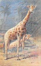 yan110001 - Giraffe Postcard Post Card
