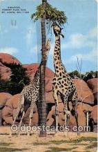 yan110011 - St Louis, MO, USA Giraffes, Forest Park Zoo Postcard Post Card