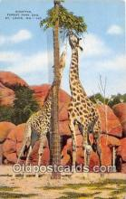 yan110012 - St Louis, MO, USA Giraffes, Forest Park Zoo Postcard Post Card