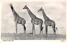 yan110026 - African Wild Life Postcard Post Card