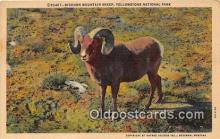 yan120001 - Yellowstone National Park, USA Bighorn Mountain Sheep Postcard Post Card