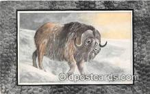 yan120002 - Musk Ox Postcard Post Card