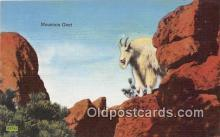 yan120003 - Black Hills, SD, USA Mountain Goat Postcard Post Card