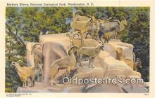 yan120005 - Washington DC, USA Barbary Sheel, National Zoological Park Postcard Post Card
