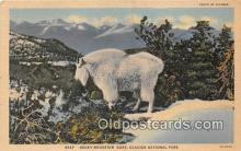 yan120009 - Glacier National Park Real Photo Rocky Mountain Goat Postcard Post Card