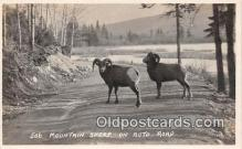yan120010 - Auto Road Mountain Sheep Postcard Post Card