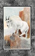 yan120013 - Mountain Goat Postcard Post Card