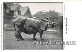 yan130002 - Regents Park, NW Indian Rhinoceros Postcard Post Card