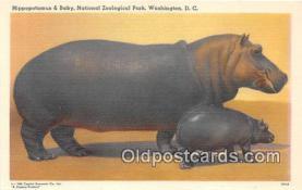 yan130005 - Washington DC, USA Hippopotamus & Baby, National Zoological Park Postcard Post Card