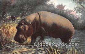 yan130008 - Natives of Africa Hippopotamus Postcard Post Card