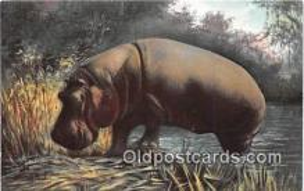 yan130012 - Natives of Africa Hippopotamus Postcard Post Card