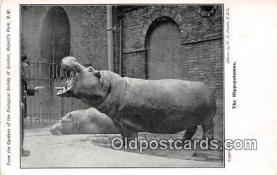 yan130014 - Regents Park, NW Hippopotamus Postcard Post Card
