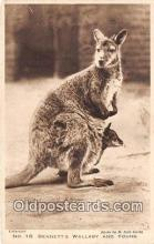 yan140004 - Bennett's Wallaby & Young Postcard Post Card