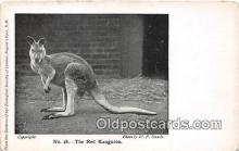 yan140012 - Regents Park, NW Red Kangaroo Postcard Post Card