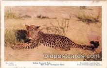 yan150010 - New York Zoological Park, USA Indian Leopard Cub Postcard Post Card