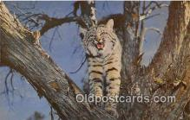 yan150017 - Wildcats Postcard Post Card