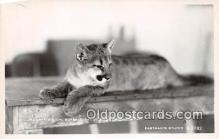 yan150018 - Redding, CA, USA Real Photo - Mountain Lion, Buffalo Ranch Postcard Post Card