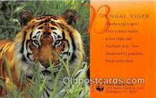 yan150021 - Washington DC, USA Bengal Tiger, World Wildlife Fund Postcard Post Card