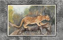 yan150025 - Felis Ocelot Postcard Post Card