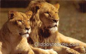 yan150026 - Serengeti Plain Safari Postcard Post Card