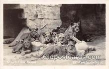 yan150027 - El Monte, CA, USA Gay's Lion Farm, Real Photo  Postcard Post Card