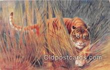 yan150028 - Tigress Postcard Post Card
