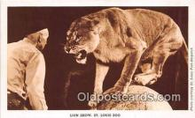yan150029 - St Louis, MO, USA Lion Show, St Louis Zoo Postcard Post Card