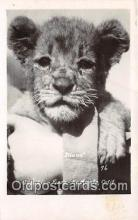 yan150046 - El Monte, CA, USA Diana, Gay's Lion Farm Postcard Post Card