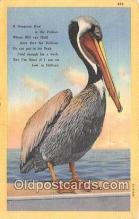 yan170001 - Pelican Postcard Post Card