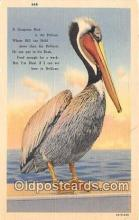 yan170004 - Pelican Postcard Post Card