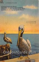 yan170008 - Florida, USA Pelican Postcard Post Card