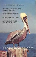 yan170010 - Florida, USA Pelican Postcard Post Card