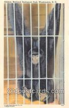 yan190008 - Washington DC, USA Gibbon, National Zoological Park Postcard Post Card