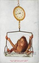 yan190009 - New York Zoological Park, USA Weighing a Baby Orang Postcard Post Card