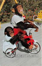 yan190010 - Miami, FL, USA Me & My Shado, Monkey Jungle Postcard Post Card