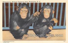 yan190017 - Washington DC, USA Chimpanzees, National Zoological Park Postcard Post Card