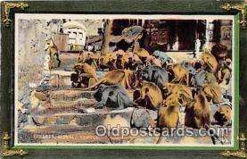 yan190019 - Benares Monkey Temple Postcard Post Card