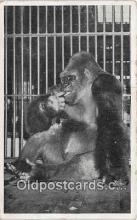 yan190022 - Chicago, USA Lincoln Park Zoo Postcard Post Card