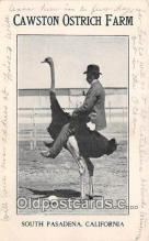 yan210013 - South Pasadena, CA, USA Cawston Ostrich Farm Postcard Post Card
