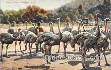 yan210025 - Pasadena, CA, USA Ostrich Farm Postcard Post Card