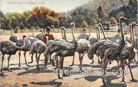 yan210025 - Pasadena, CA, USA Ostrich Farm Postcard Post Card