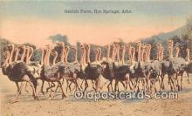 yan210029 - Hot Springs, Ark, USA Ostrich Farm Postcard Post Card