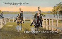 yan210030 - Hot Springs, Ark, USA Cockburn's Ostrich Farm Postcard Post Card