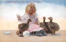 yan210041 - Young Ostriches, Cawston Ostrich Farm Postcard Post Card