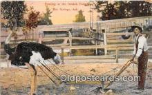 yan210047 - Hot Springs, Ark, USA Farming, Ostrich Farm Postcard Post Card